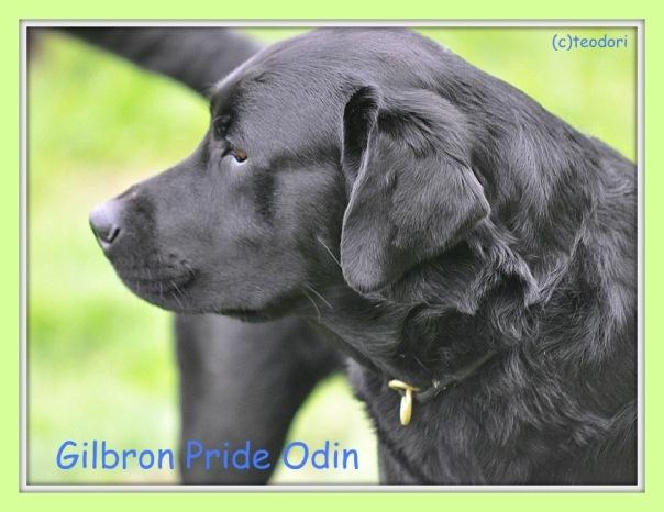 odins20110913orrsm.jpg