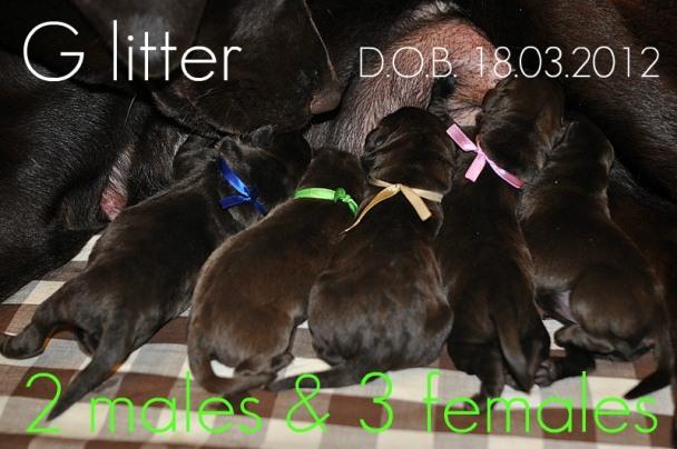 20120318_glitter1.jpg